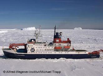 Новые корабельные маршруты угрожают флоре и фауне Арктики
