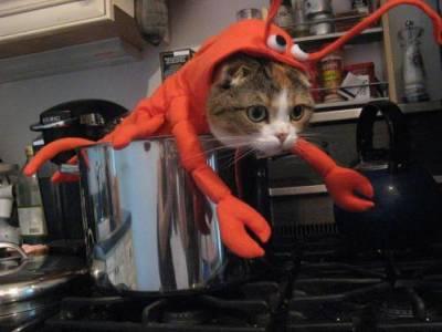 Летающий кот поднял в воздух человека